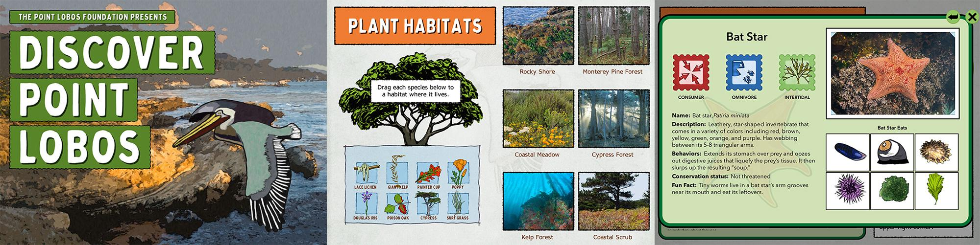 graphic representing Discover Point Lobos