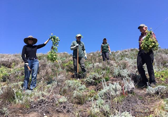 Photo of docents on a conservation project at Point Lobos