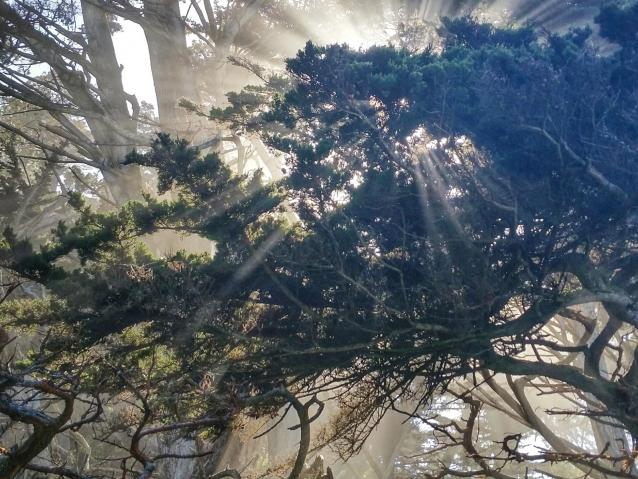 photo of trees at Point Lobos