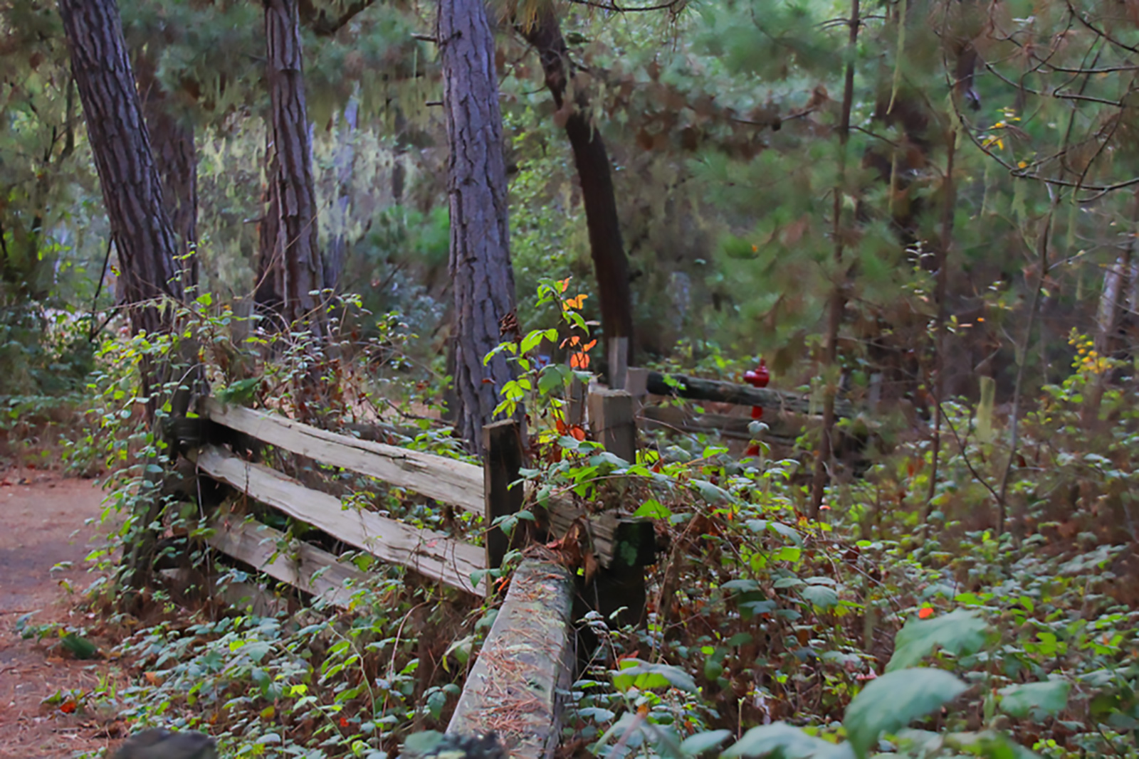 photo of a hiking path at Point Lobos